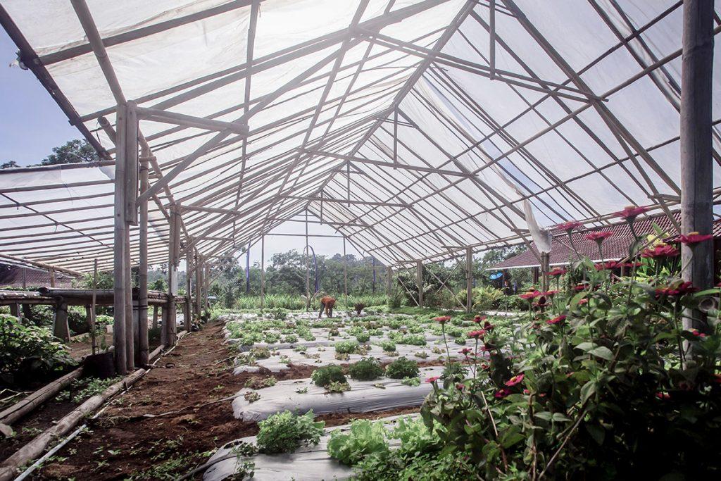 yogis-garden-farming-corner